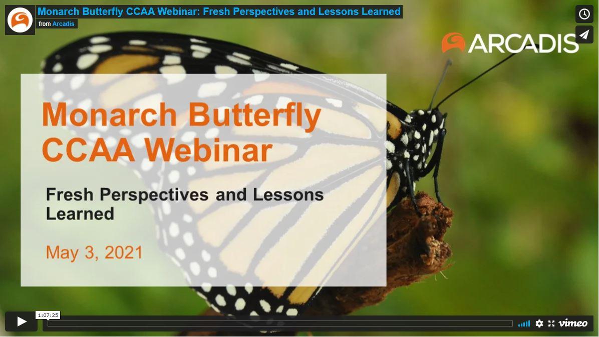 Monarch Butterfly CCAA
